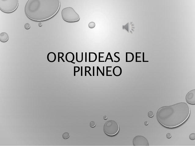 ORQUIDEAS DEL PIRINEO