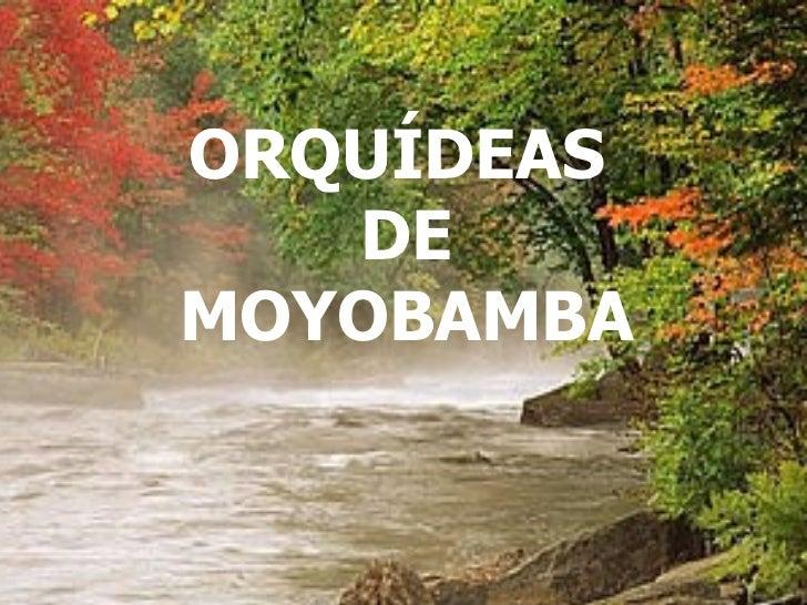 NO TE OLVIDESDE SONREIR PESE A TODO... ORQUÍDEAS  DE MOYOBAMBA