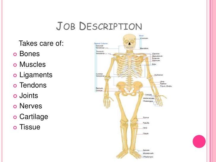 Job Description And Outlook Doctor Nurse Examine X Rays