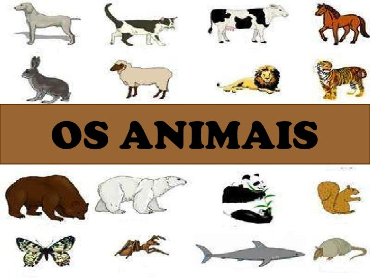 OS ANIMAIS<br />