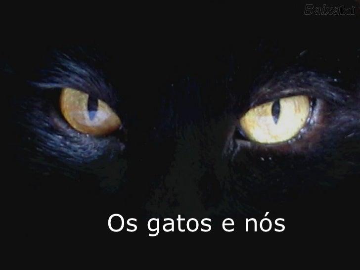 O segredo dos gatos...