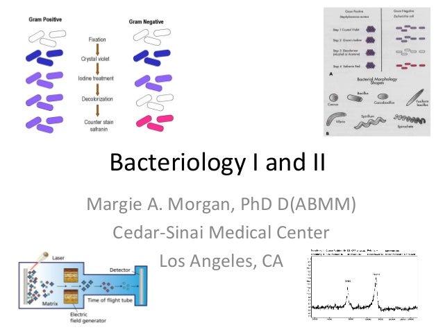 Bacteriology I and IIMargie A. Morgan, PhD D(ABMM)Cedar-Sinai Medical CenterLos Angeles, CA
