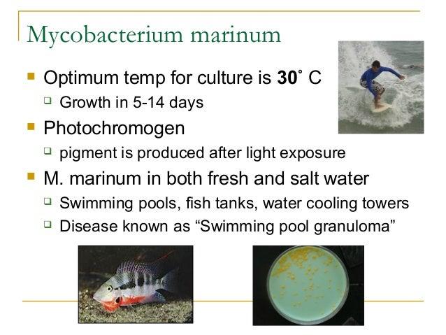 Mycobacteriology