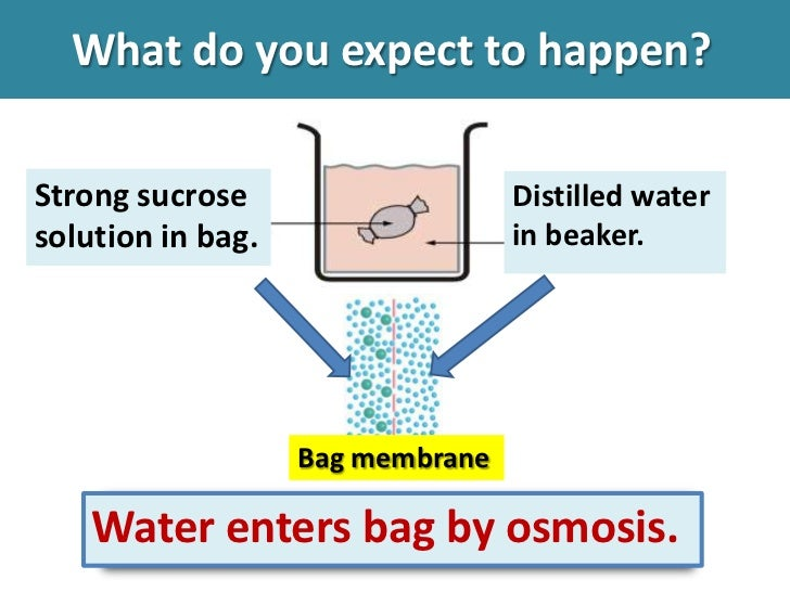 experiment on osmosis