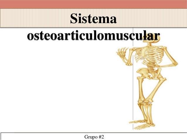 Sistema  osteoarticulomuscular  Grupo #2