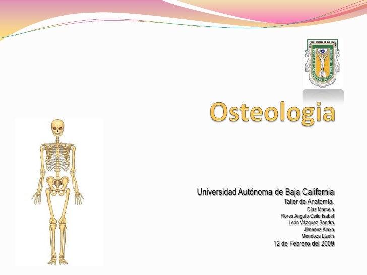 Osteologia<br />Universidad Autónoma de Baja California<br />Taller de Anatomía.<br />Díaz Marcela<br />Flores Angulo Ceil...