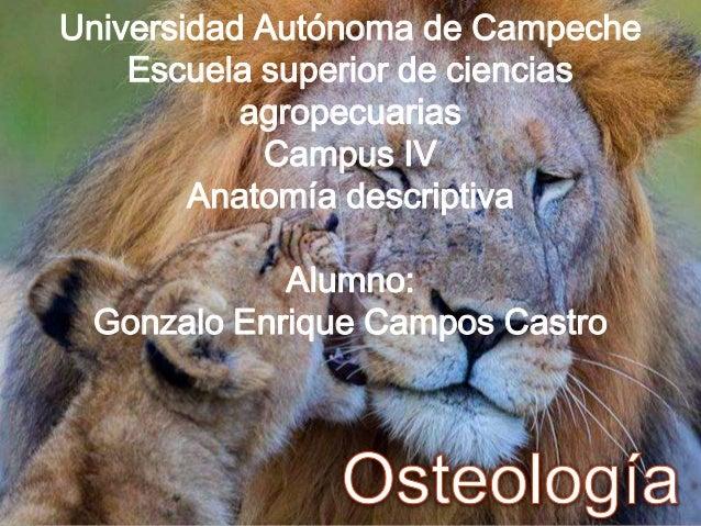 Universidad Autónoma de Campeche Escuela superior de ciencias agropecuarias Campus IV Anatomía descriptiva Alumno: Gonzalo...