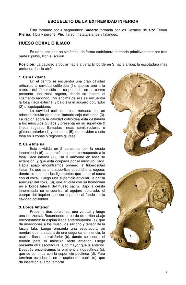 ESQUELETO DE LA EXTREMIDAD INFERIOR      Esta formado por 4 segmentos: Cadera: formada por los Coxales. Muslo: FémurPierna...