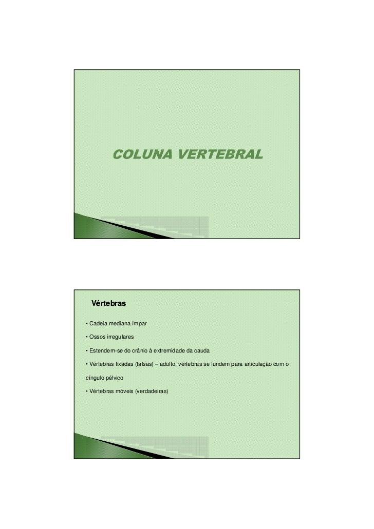 23/08/2010  Vértebras• Cadeia mediana ímpar• Ossos irregulares• Estendem-se do crânio à extremidade da cauda• Vértebras fi...