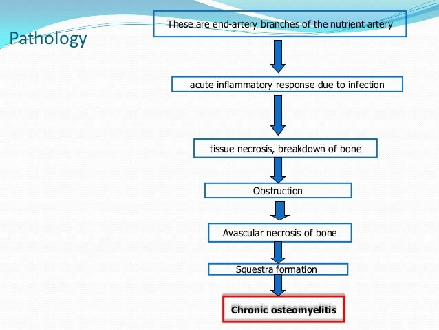 the outer region of the adrenal gland that secretes corticosteroids