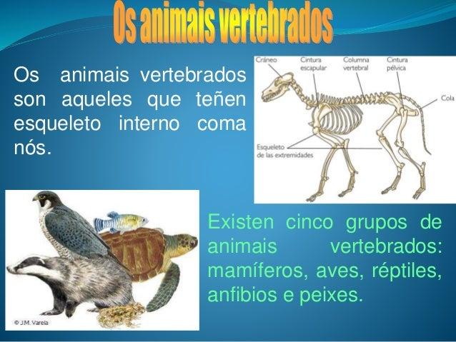 Os animais vertebrados son aqueles que teñen esqueleto interno coma nós. Existen cinco grupos de animais vertebrados: mamí...