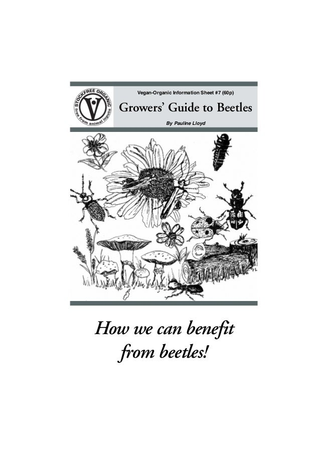 Vegan-Organic Information Sheet #7 (60p)  Growers' Guide to Beetles By Pauline Lloyd  How we can benefit from beetles! •1•