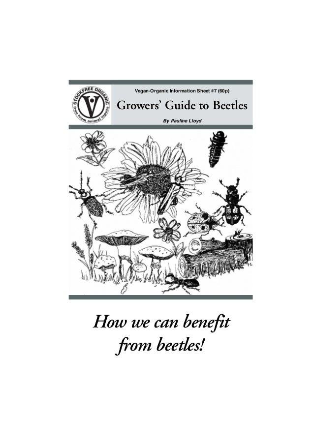Organic Growers' Guide to Beetles ~ Vegan Organic Gardening