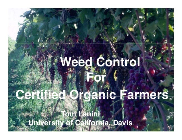 Weed Control For Certified Organic Farmers Tom Lanini University of California, Davis