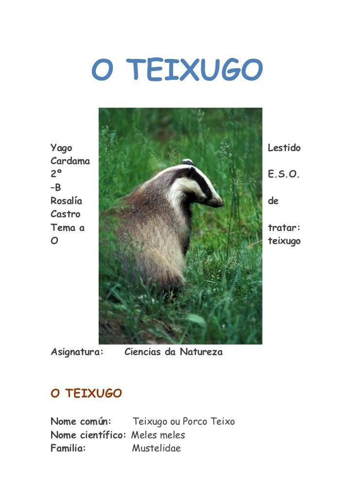 O teixugo   (2003)