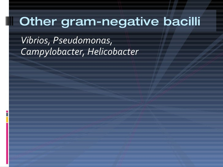 Other Gram Negative Bacilli