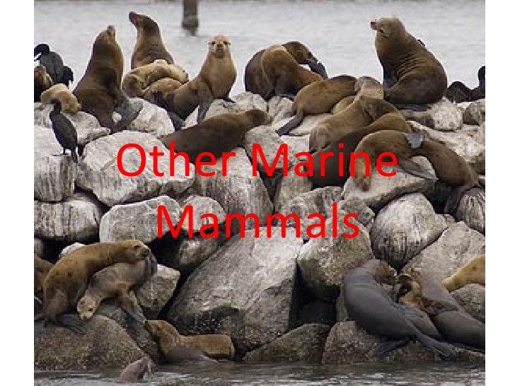 Other Marine Mammals