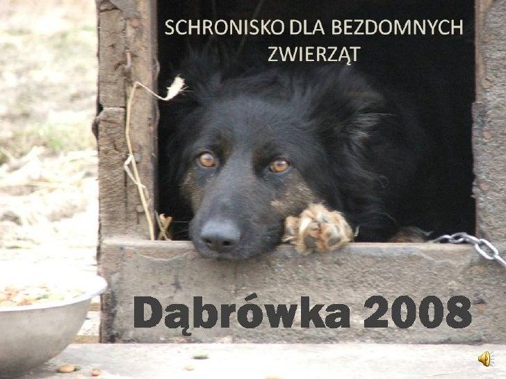 OTOZ Animals - schronisko w Dabrowce k. Wejherowa