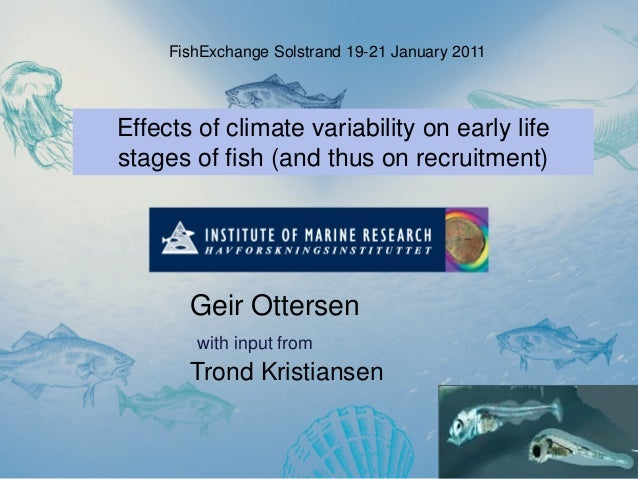 Effects of climate variability on early life stages of fish (and thus on recruitment) Geir Ottersen with input from Trond ...