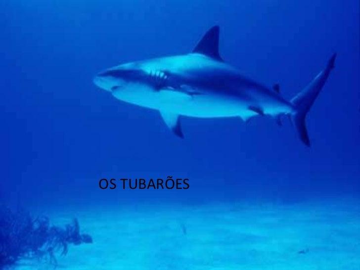O tubarão