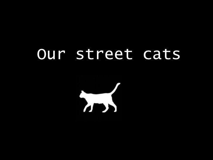 Our street cats
