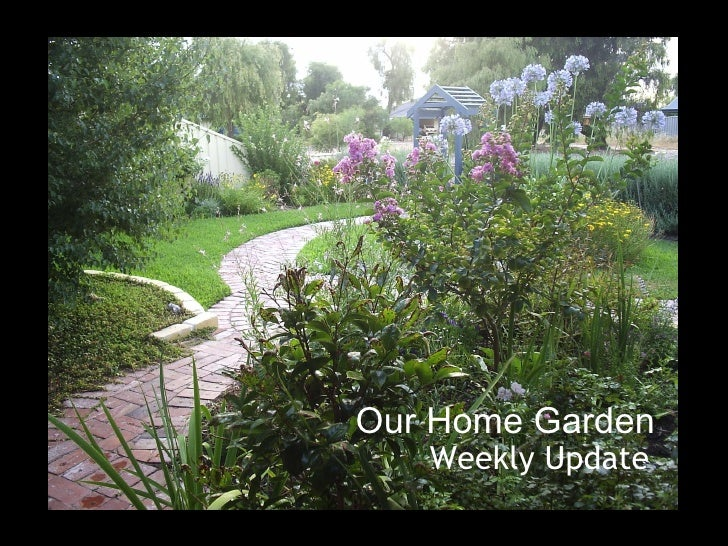 Our Home Garden - Week 1 Update