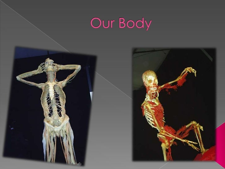 OurBody<br />