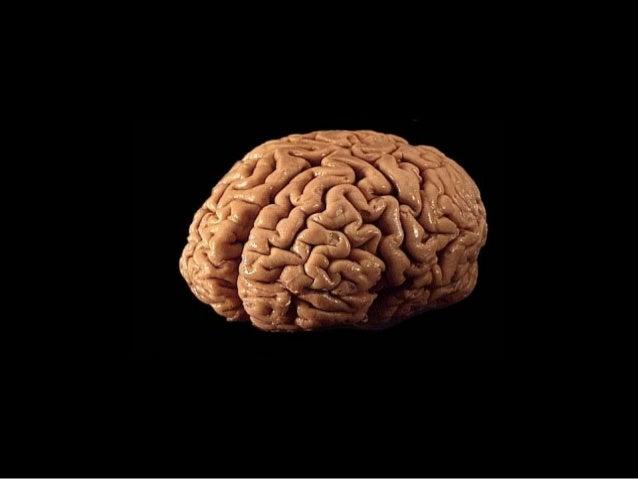Our new digital brain