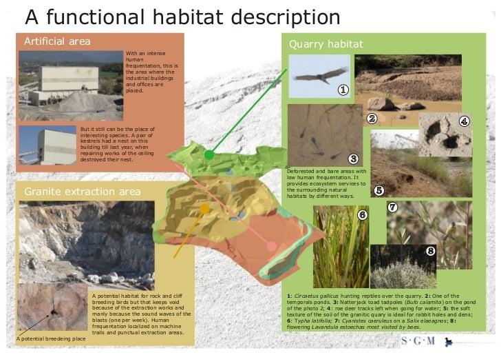 A functional habitat description  Artificial area                                                      Quarry habitat     ...