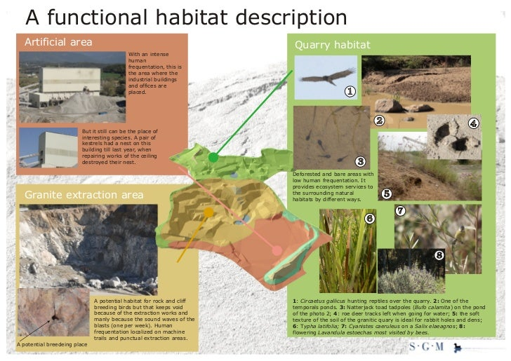 Visual abstract of our proposal on Quarry Life Award