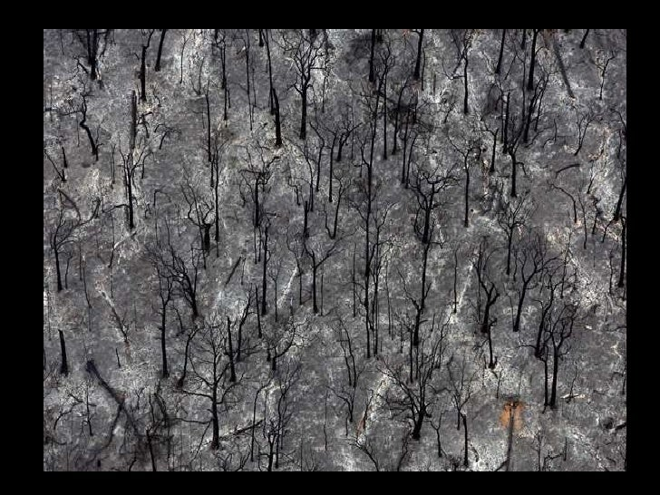 Out of Darkness - The Victorian 'Black Saturday' Bushfires, 2009.