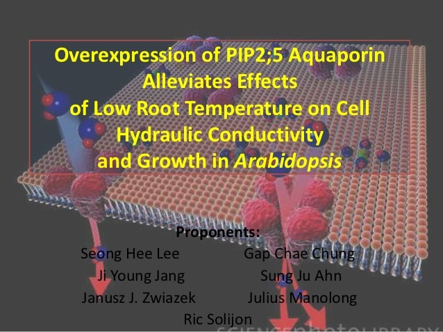 Overexpression of PIP2;5 Aquaporin        Alleviates Effects of Low Root Temperature on Cell      Hydraulic Conductivity  ...