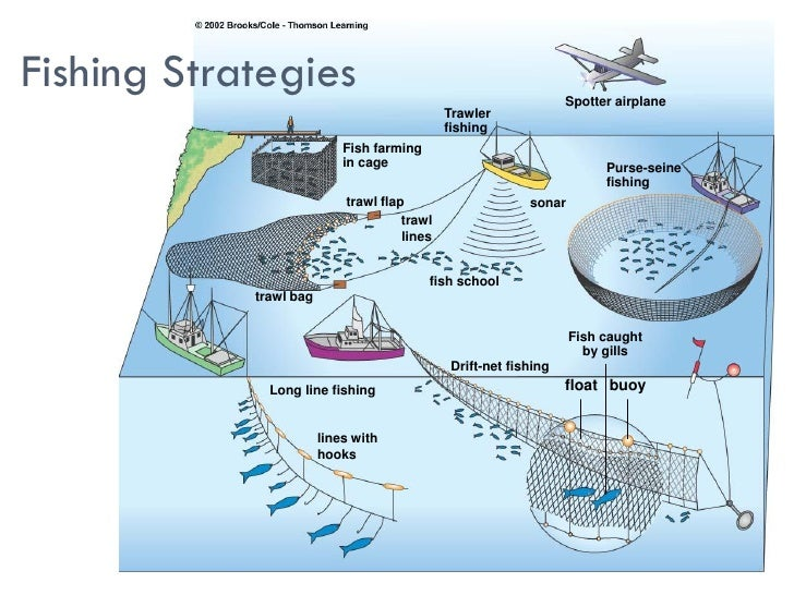 Overfishing aquaculture for Long line fishing