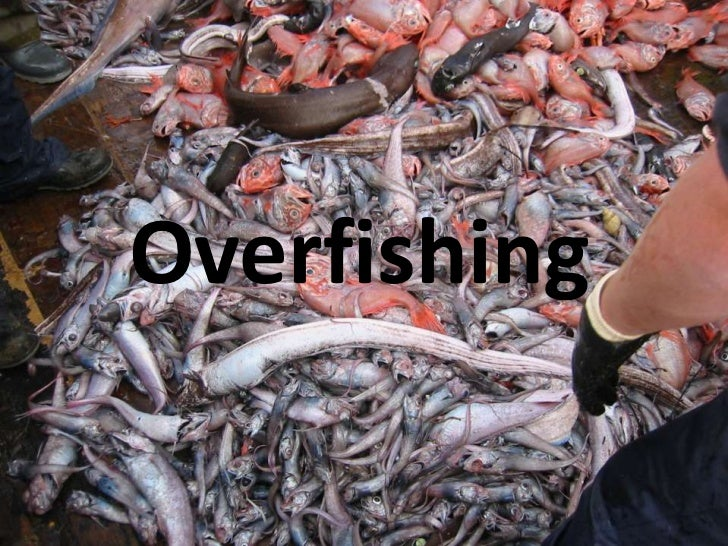 Overfishing power point
