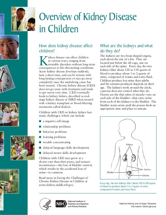Overview of Kidney Disease  in Children How does kidney disease affect children?  What are the kidneys and what do they do...