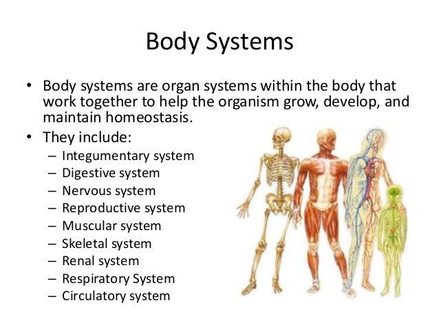human endocrine system worksheet