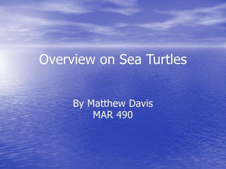 Overview on Sea Turtles        By Matthew Davis          MAR 490