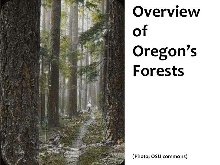 Overview Oregon's forests