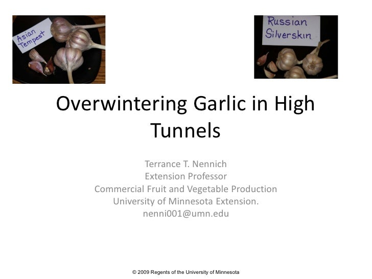 Overwintering Garlic in High          Tunnels               Terrance T. Nennich               Extension Professor     Comm...