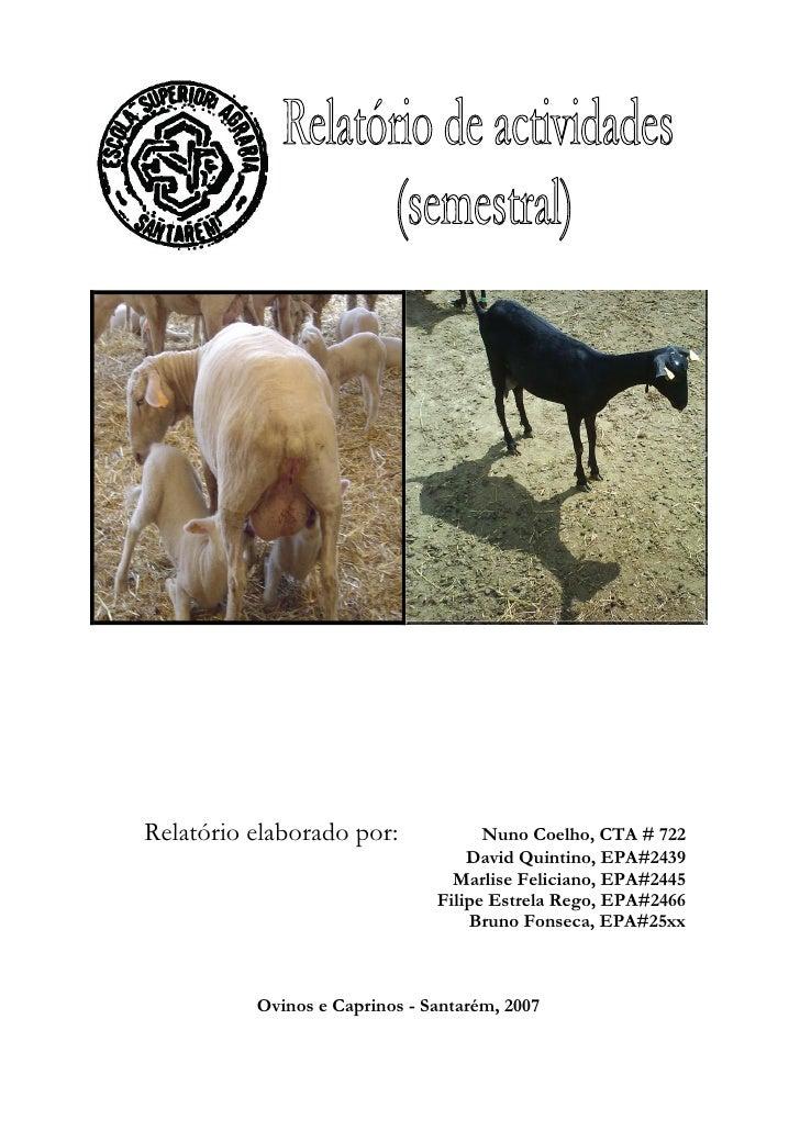 Relatório Semestral (Ovinos e Caprinos)