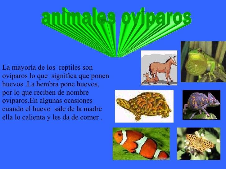 animales oviparos La mayoría de los  reptiles son oviparos lo que  significa que ponen huevos .La hembra pone huevos, por ...