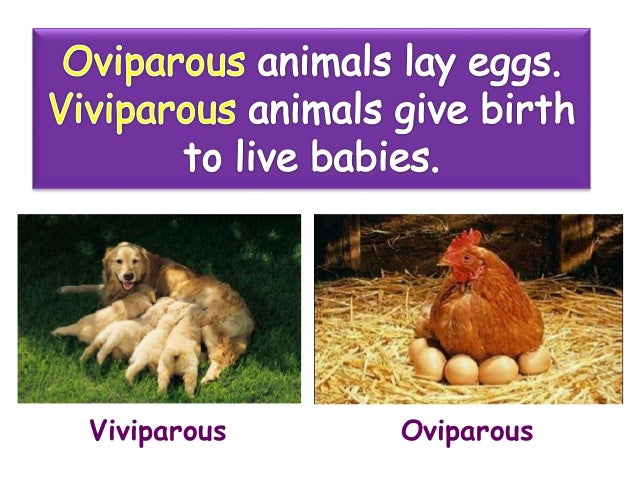 Oviparous And Viviparous Animals 60472490 on Plant Life Cycle Stages