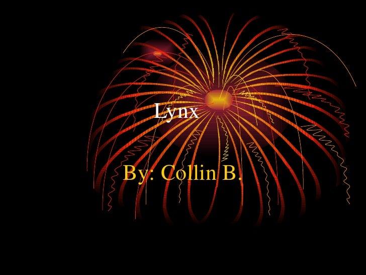 Lynx By: Collin B.