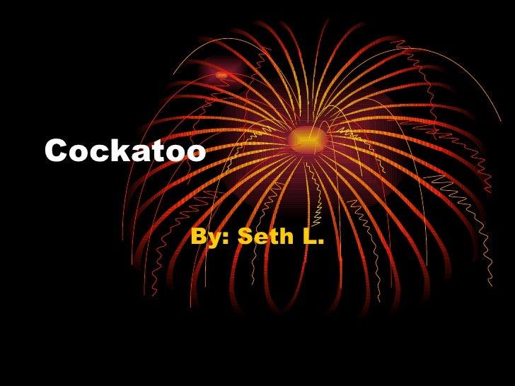 Cockatoo By: Seth L.
