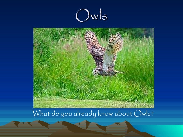 Owls <ul><li>What do you already know about Owls? </li></ul>
