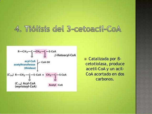 Los Acidos Grasos Los ácidos Grasos de Cadena
