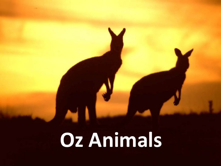 Oz animals