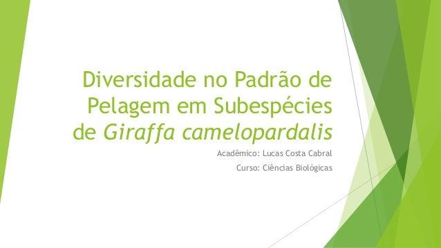 Diversidade no Padrão de Pelagem em Subespécies de Giraffa camelopardalis Acadêmico: Lucas Costa Cabral Curso: Ciências Bi...