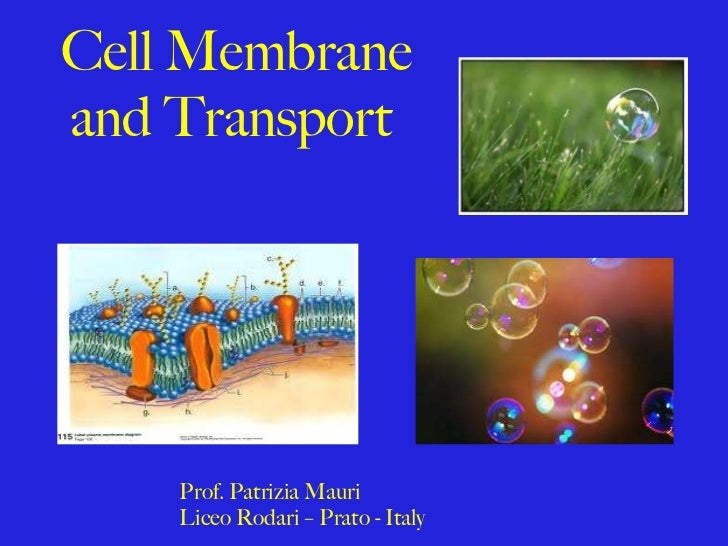 Cell Membrane and Transport  Prof. Patrizia Mauri  Liceo Rodari – Prato - Italy