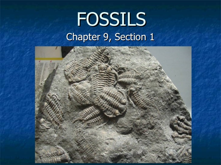 P P T  Fossils 9